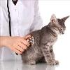 Ветеринарные клиники в Атамановке